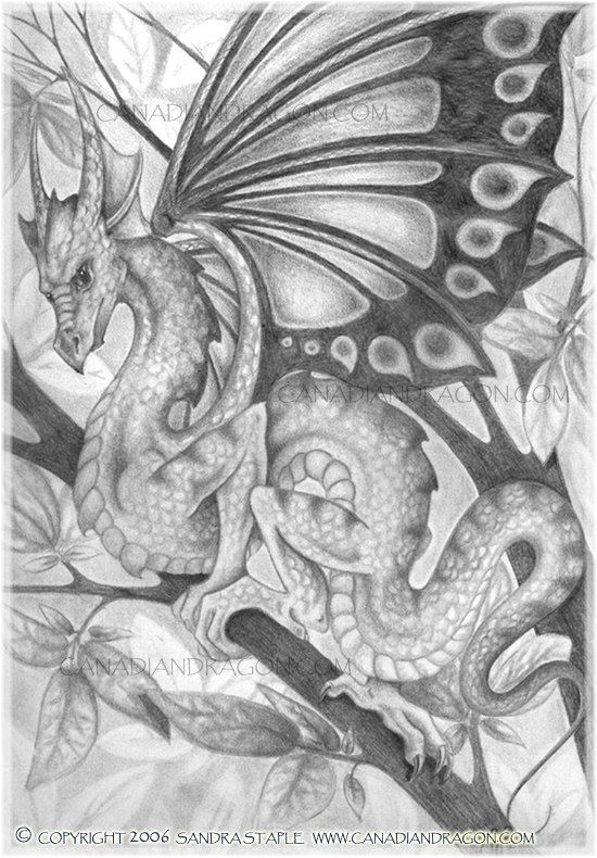 That blurring of fantasy forms - dragons with butterfly wings!
