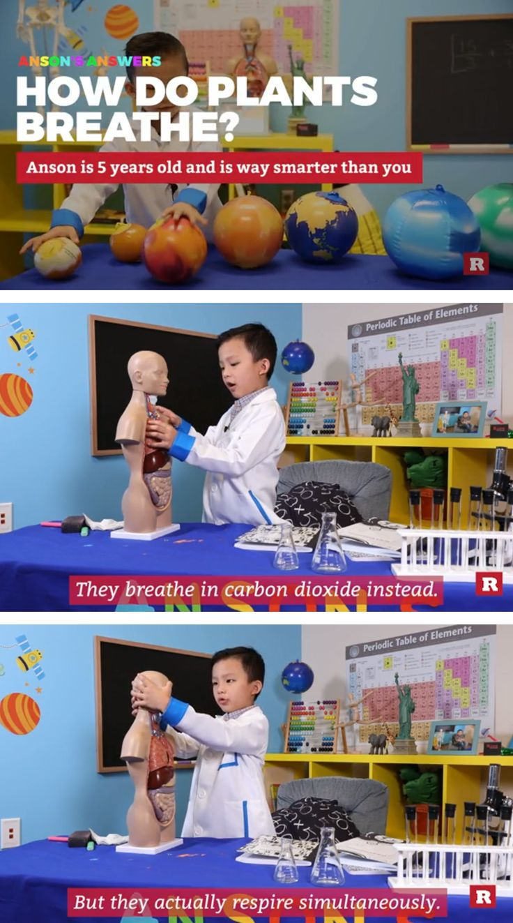 5-year-old Anson Wong has a college-level grasp on various areas of science, dreams of becoming the president and can speak multiple languages.