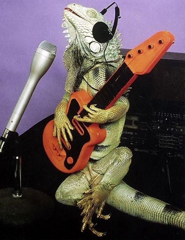 musical iguana