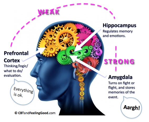 Amygdala and Fight or Flight. Understanding the fight or flight response (CBT)