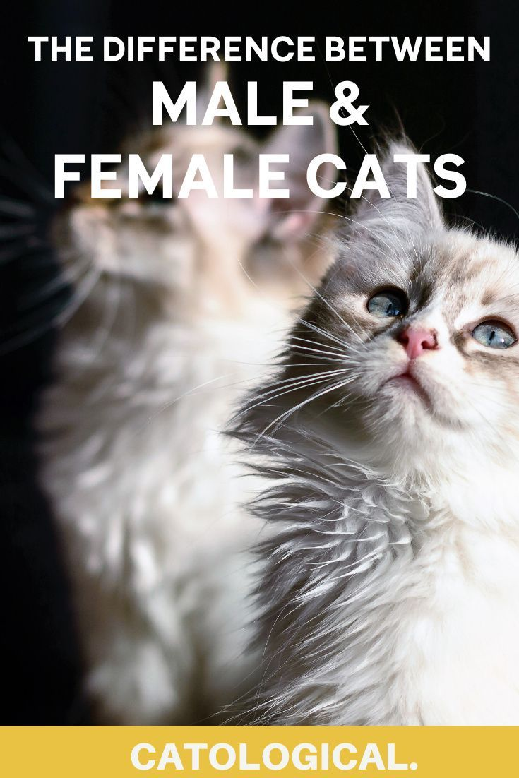 The Differences Between Male And Female Cats How To Tell Cat Genders Cat Lover Quote Cats Cat Lovers