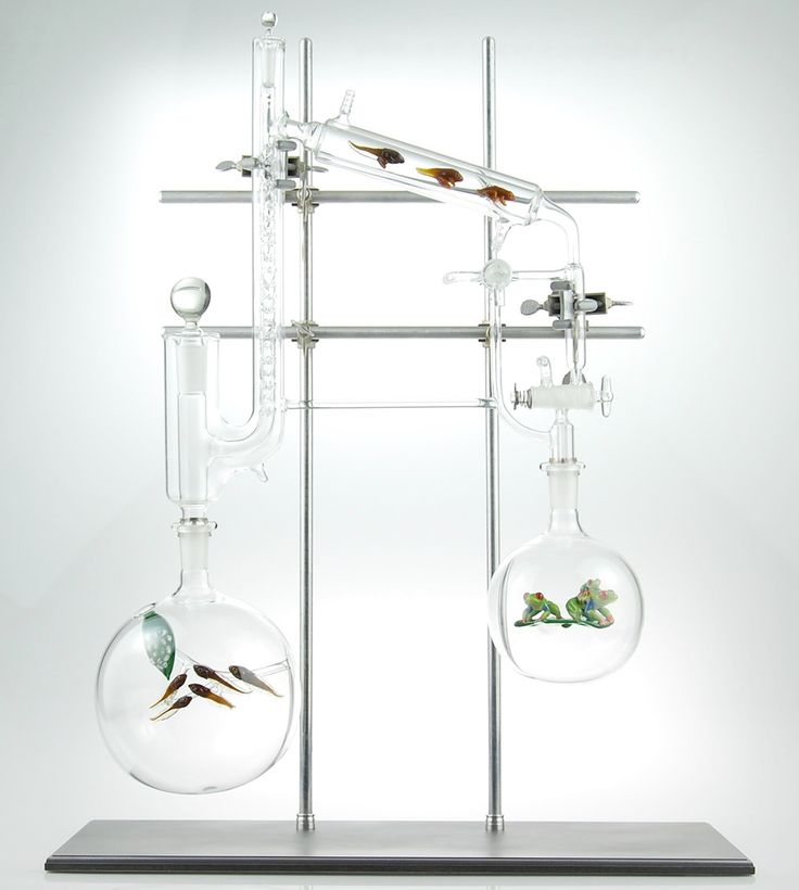 Metamorphosis II - The distillation of the red eyed tree frog, from egg to tadpole to adult frog. One of many pieces by Virgina-based glass artist Kiva Ford, who fabricates one-of-a-kind glass instruments designed for special applications in scientific laboratories. His other pieces consist of glass vessels, miniatures, and goblets,