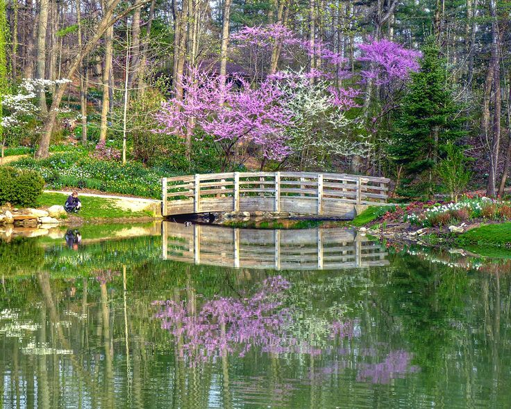 Spring at the #EJCArboretum at #JMU Wouldn't you want to be the arboretum visitor staring into the pond watching koi!? Photo by Frank Doherty.