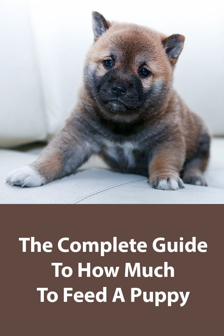 Puppy Feeding Guidelines Puppies Pet Insurance For Dogs Dogs