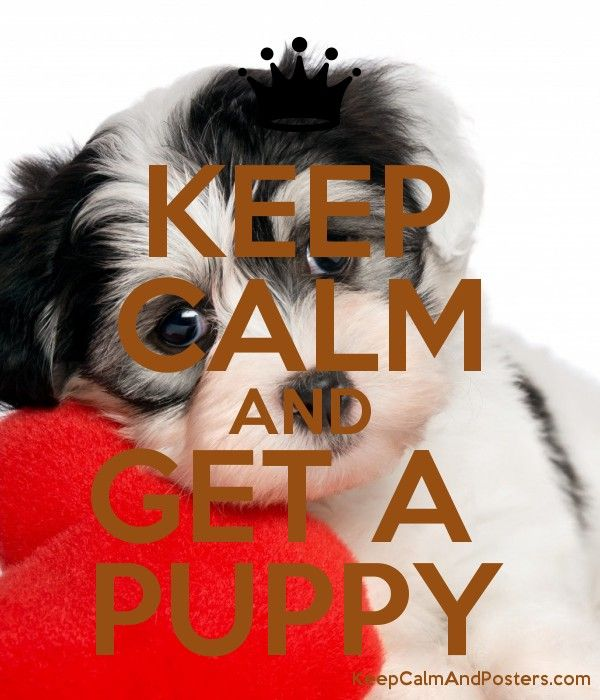 KEEP CALM AND GET A  PUPPY