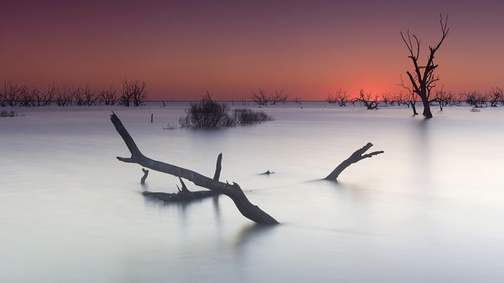 Location: Menindee Lake, NSW, Australia (a man made redirection of water from the Darling River).