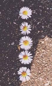 Resultado de imagen para flores vintage tumblr wallpapers con frases