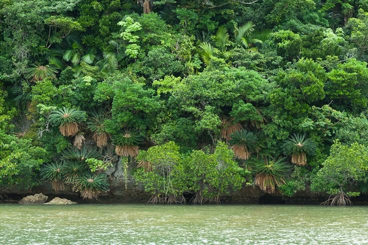 Vertical jungle of Ishigaki, Japan