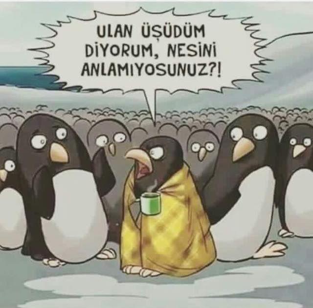 Ulan üşüdüm diyorum, nesini anlamıyorsunuz?! #karikatür #mizah #matrak #espri #komik #şaka #gırgır #sözler #güzelsözler #komiksözler