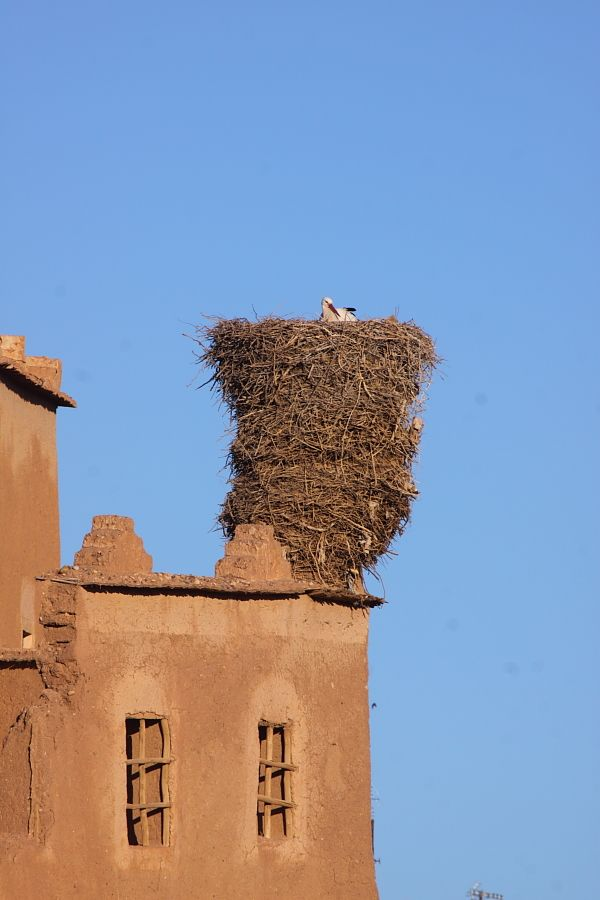 An ancient White Stork nest at Ourzazate, Morocco by Adam Riley