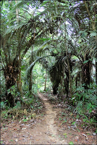 Off the beaten path in Suriname. It is good to know about the 'noise tree': If you've lost your way, you can beat on it with a stick and the sound it makes is loud enough for others to find you. (V)