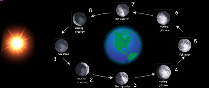 Phases Of The Moon By Brooke Olson Thinglink Moon Phases No