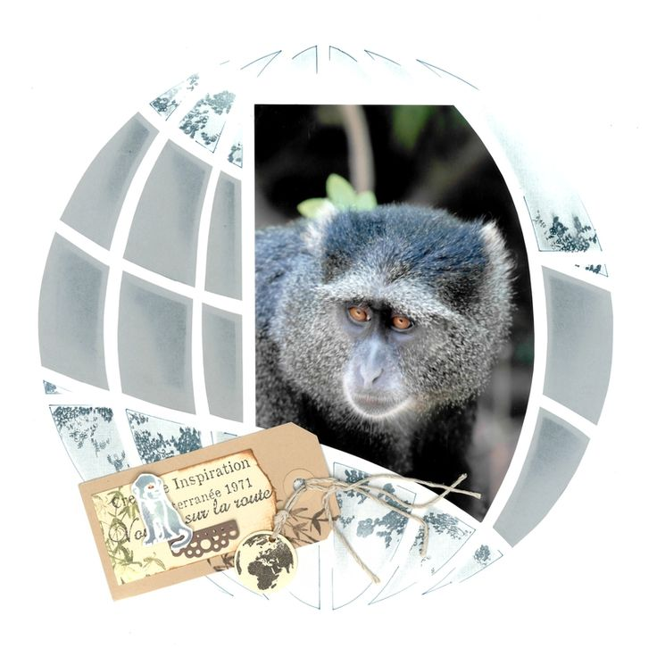 """Azza """" Autour du Monde"""" - Le singe bleu du Parc de Manyara"""