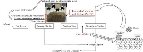 Effect of phosphate releasing in activated sludge on phosphorus removal from municipal wastewater
