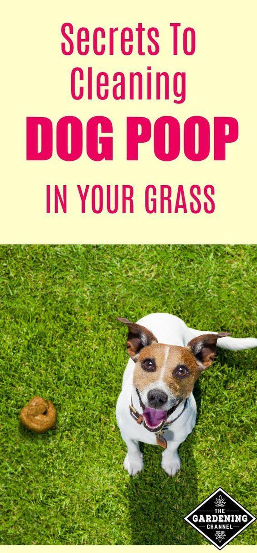 Watch Dogs  Cat Rainbow Poop