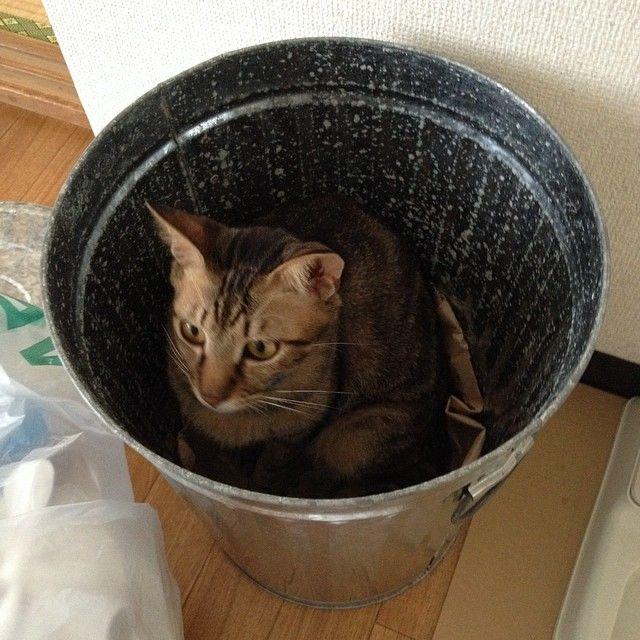 ゴミ箱の中に