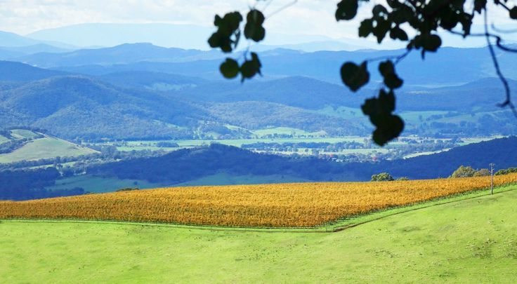 Autumn vines in the King Valley, Victoria