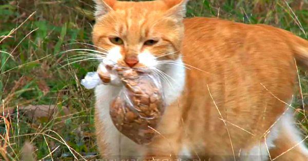 Zwerfkat wil alleen voedsel in een zakje – Dan volgen ze haar en begrijpen ze wat er gaande is