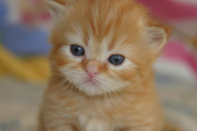 Safety Tips For First Time Cat Owners