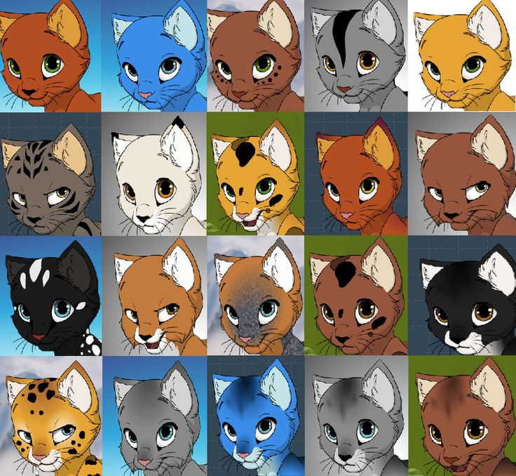 Warriors Erin Hunter Books In Order: 21 Best Warrior Cats Images On Pinterest