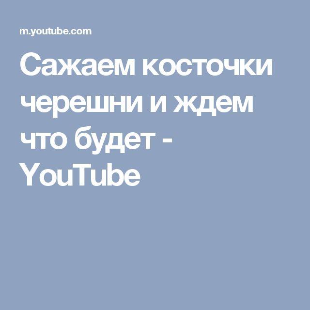 Сажаем косточки черешни и ждем что будет - YouTube