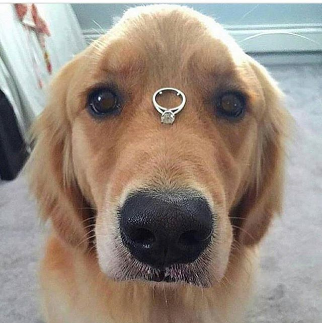 Follow @beatricerida  #happydog #dogsmile #doglove  #instadog #lovedogs #ilovemydog #cutedog #dogoftheday #instapet #adorable #kawaii #말티즈 #puppy #okayusan #マルチーズ #犬バカ部 #癒しわんこ #わんこ #愛犬 #フォロー #大好き #paw #pecoいぬ部 #犬のいる暮らし #お手#fluffy#puppies