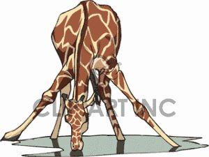 Girafe Clip Art, Photos, Vector Clipart, Royalty-Free Images # 1