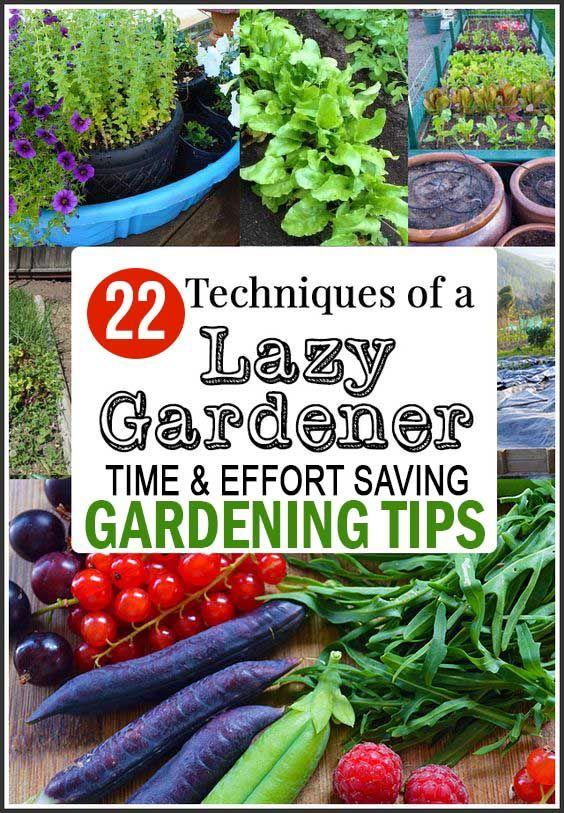 The Lazy Gardener: 22 Time & Effort Saving Gardening Tips