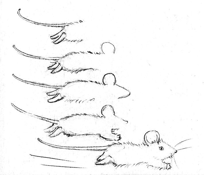 1000 bilder zu drawing illustration auf pinterest for How do you draw a mouse