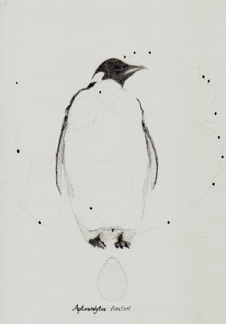 Emperor Penguin  plop-art.tumblr.com