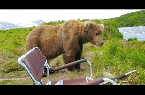 Camper Takes Video Of An Alaskan Brown Bear Stopping To Sit And Admire The View ... Right Next To Him