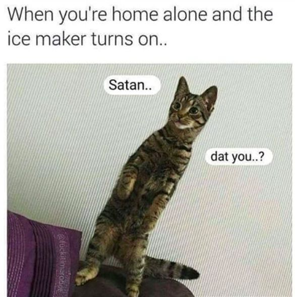 Getting creeped out: | Dare You Not To Laugh At These 23 Animal Memes