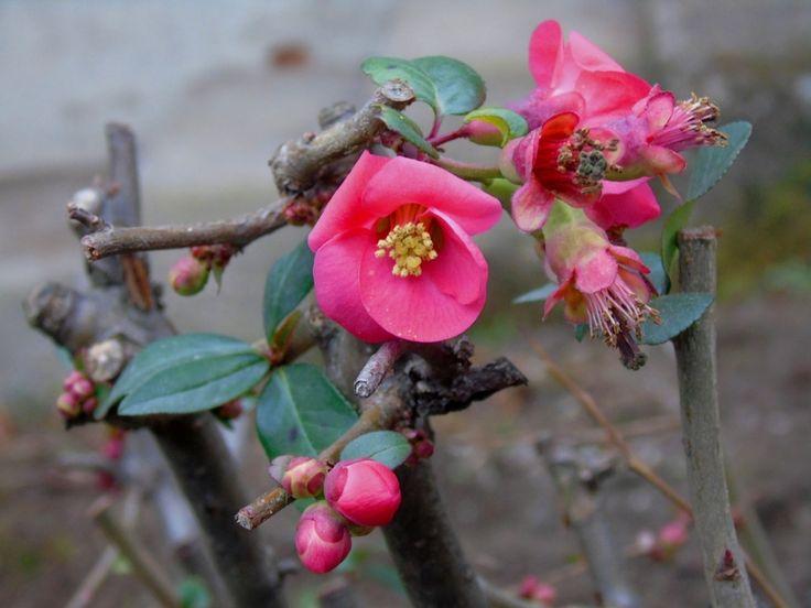 fiori 2 di Sara Vanoni
