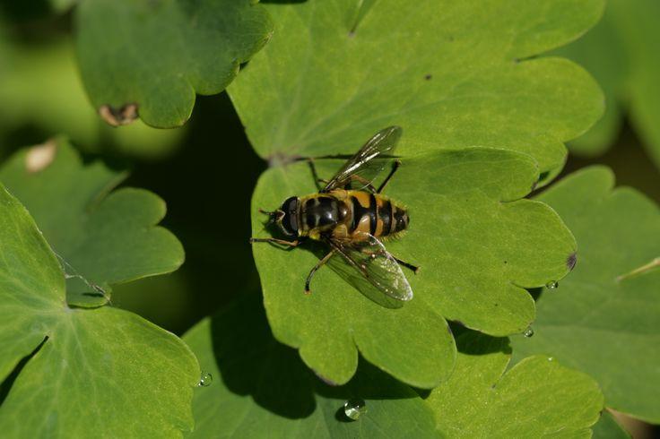 2014 05 16 vliegensoort