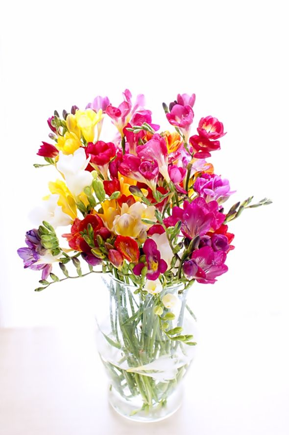 I love freesias. We had purple, white, orange, and a few other coloured ones that grew wild in our front yard. They made the air smell sweet it was really nice when the smell drifted inside.