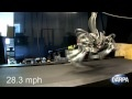 Astronasty: Quadruped Robot Finally Runs Faster Than Humans