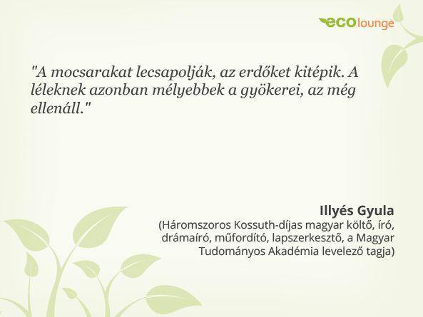 Illyés Gyula idézet / #quotation