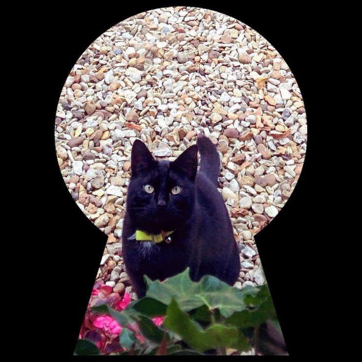 As it's International Cat Day we remember when this beauty used to visit Green Man Cottage. #blackcat #visit #throughthekeyhole