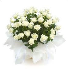 hvit blomster