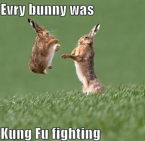 Everybody was kung fu fighting. funny picture