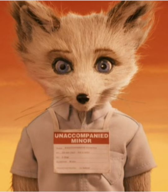 kristofferson fennec fox fantastic mr fox 2009 cinema tv pinterest fantastic fox. Black Bedroom Furniture Sets. Home Design Ideas