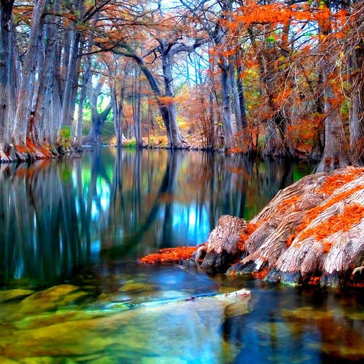 Cypress trees in Texas http://earth66.com/autumn/cypress-trees-texas/