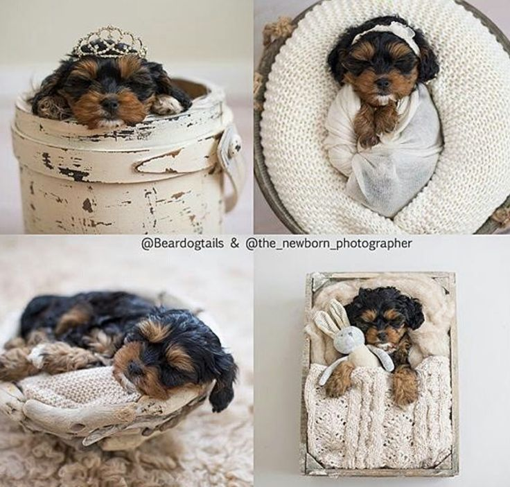 Love Lovesweet Little Puppy Swaddled In Our Cotton Ivory Dream Wrap Props For Newborn PhotographyPet