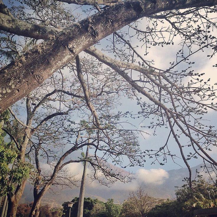 On instagram by gabyarocham #landscape #contratahotel (o) http://ift.tt/1KJubRk día nublado es distinto pero no tiene que ser triste. Es mejor pensar en  tranquilidad relajación serenidad calma... Cada uno decide cómo usar los colores. #gray #clouds #sky #branches #calm #mountain  #Venezuelatequiero