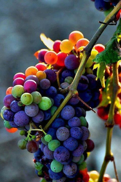 The Healthy Benefits of Eating Black Grapes