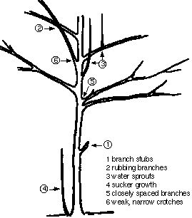 Late winter and early spring is the  time to prune trees and shrubs University of Minnesota Extension