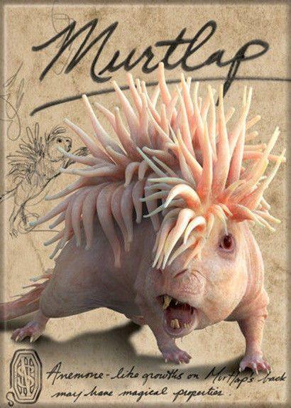 Fantastic Beasts Movie Murtlap Name and Photo Fridge Magnet Harry Potter NEW
