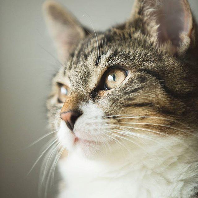 Pin By Fensterkatzen Der Katzenblog On Natureza Animal Cats Cats Of Instagram Cat Life