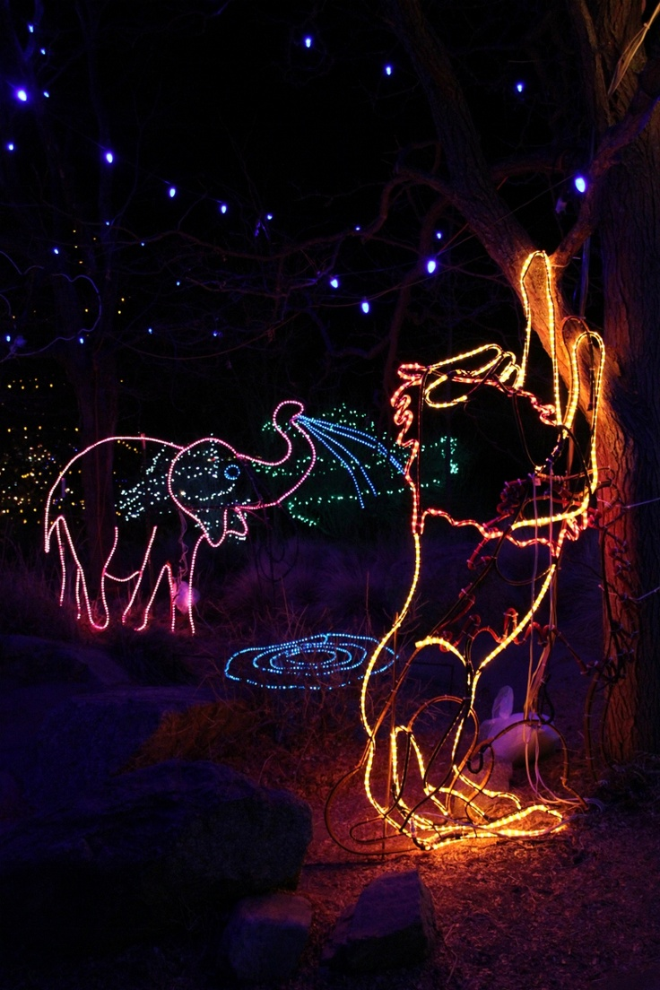 53 best cheyenne mountain zoo images on pinterest zoos mountain