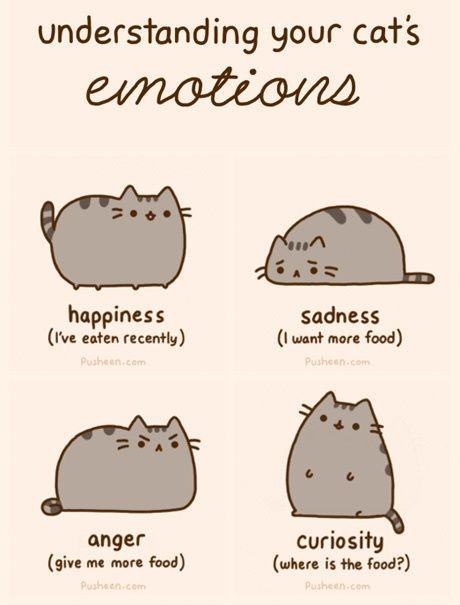 Reasons Cats Will Make U Laugh